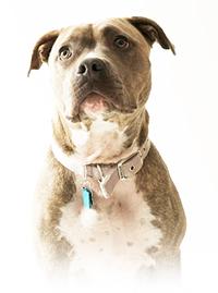 Informations sur l'assurance pour chien