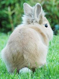 Detail sur les assurance pour lapin